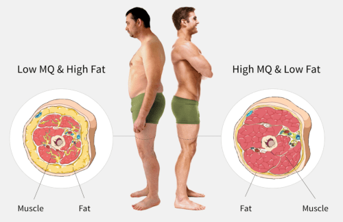 small resolution of body fat and muscle quality checkup