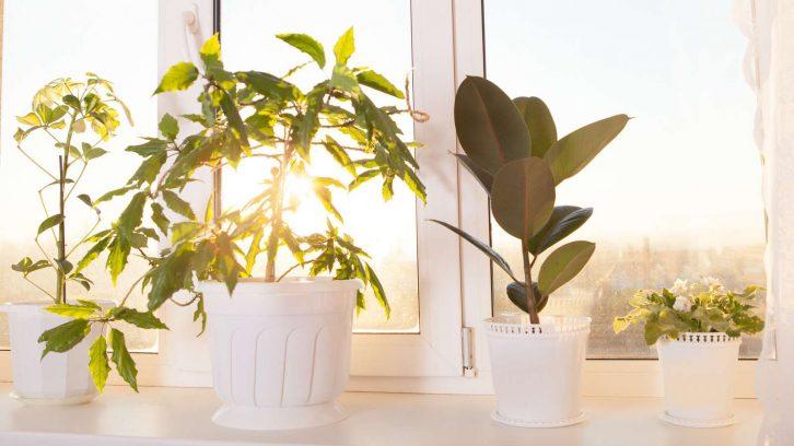 Besser wohnen mit Zimmerpflanzen evidero