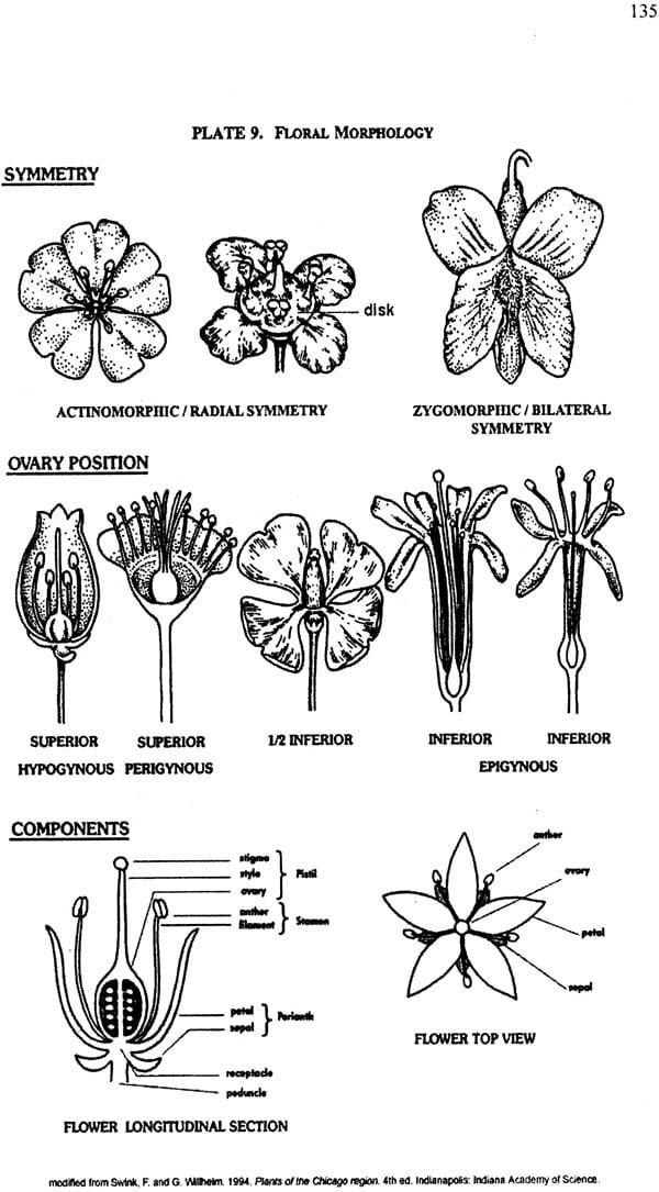 Dravya Guna Vigyan-II with Pharmacology (Comprehensive