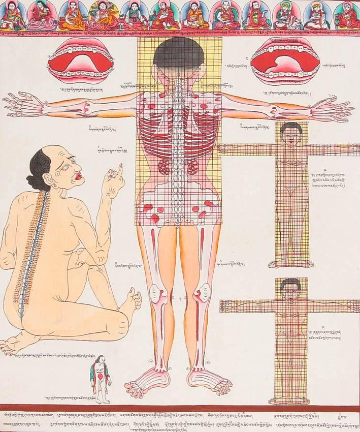 Back View of Human Anatomy