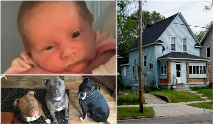 Baby Girl Killed By Pit Bull After Being Left Alone With