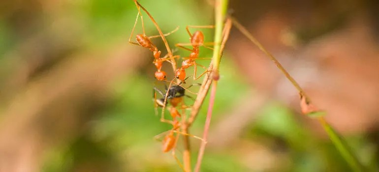 How To Get Rid Of Ants In The House Fantastic Pest Control