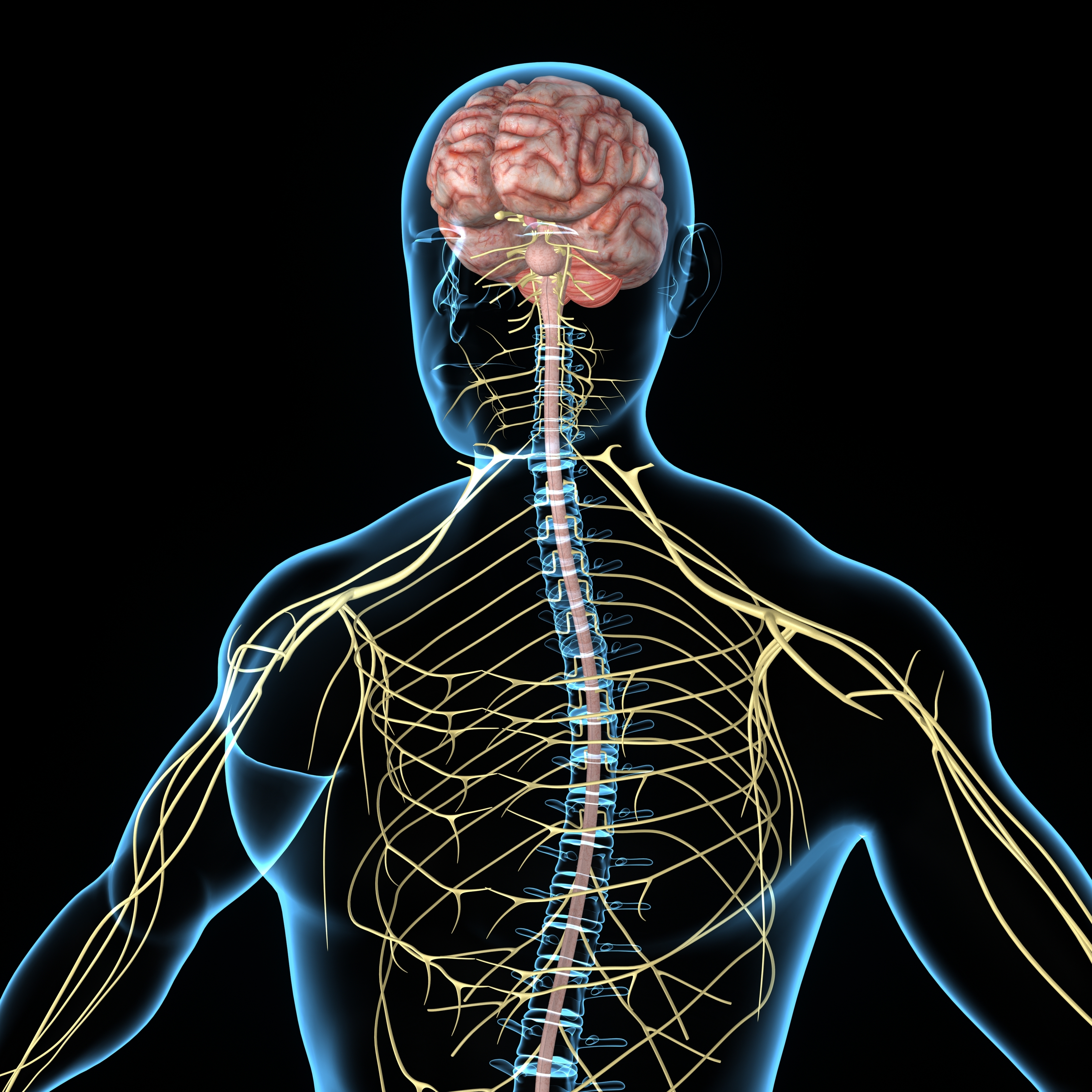 Fibromyalgia Pain May Also Result From Neurogenic