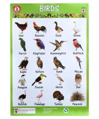 Birds chart with name