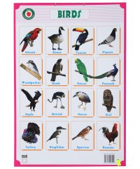 The gallery for --> Indian Birds Chart