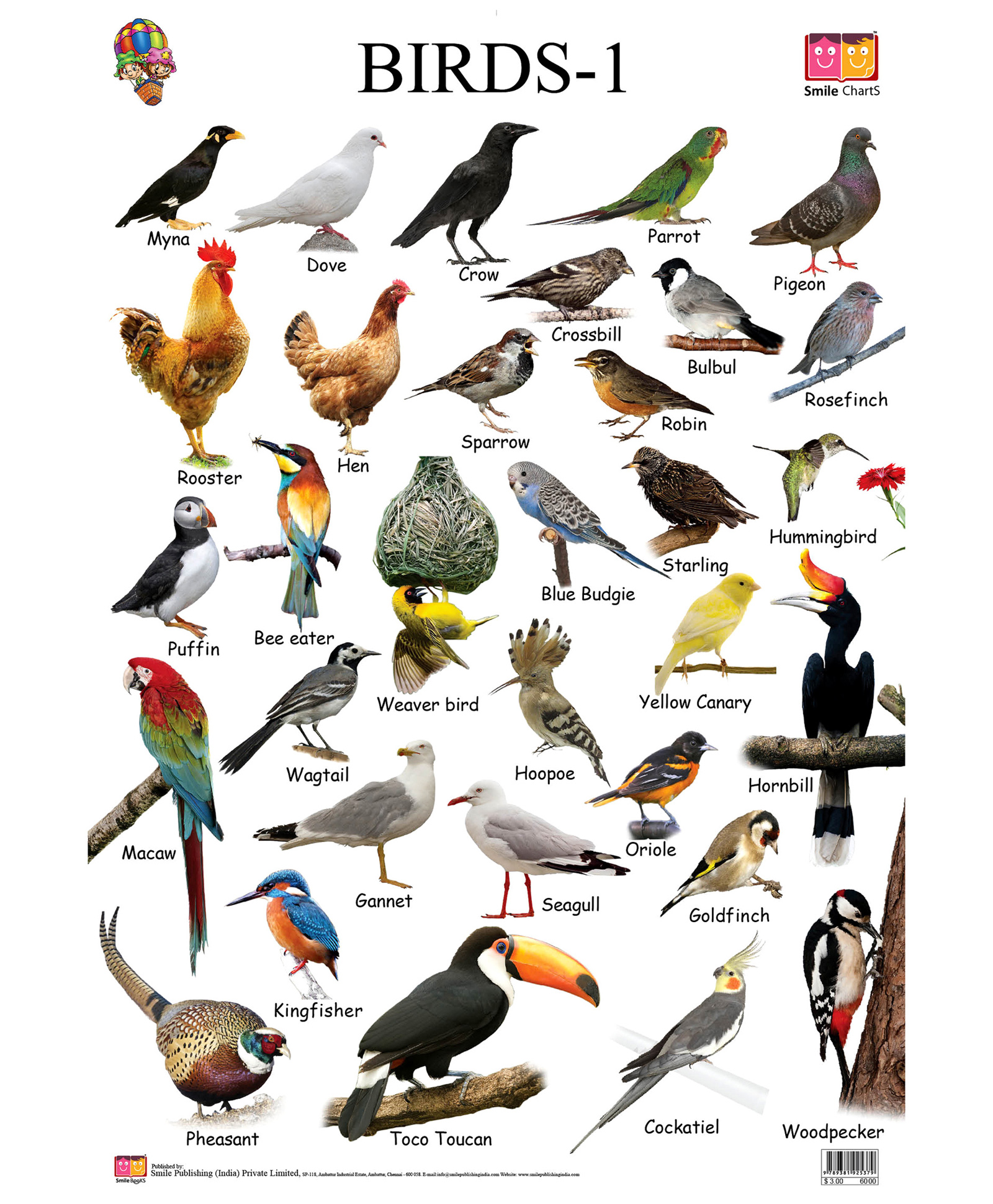 Birds Pictures Chart For Kids