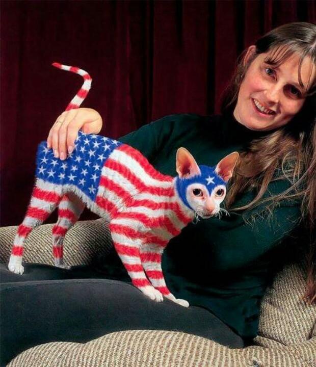 Уж ладно себя, но животных хоть пожалели бы. Тем более, что кошечка-то явно не американской породы. патриоты, прикол, сша, юмор