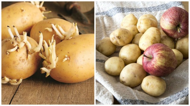 Правильно храним картошку домашние хитрости, еда, кухня, хозяйка