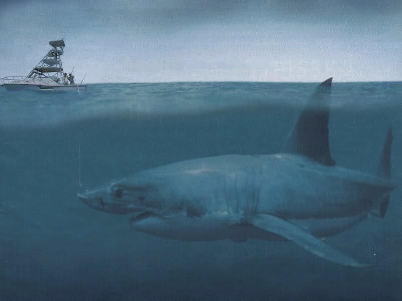 Мегалодон животные, море, ужас
