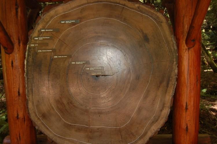 6. Отсутствие деревьев старше 200 лет история, лженаука, мифы, нло, факты, фальшивая история