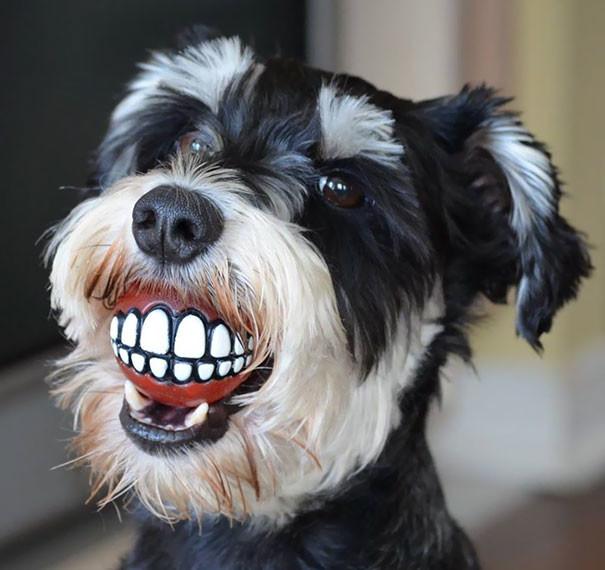 Мячик - подарок собачьего стоматолога врачи, дантисты, забавно, зубной врач, приколы, стоматологи, фото, юмор
