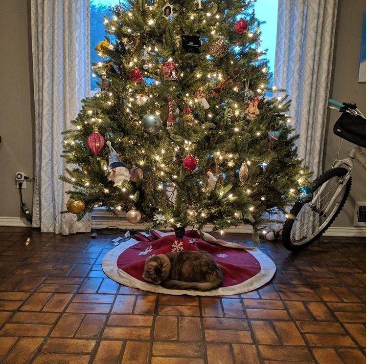 Новогодние коты кот, новый  год, рождество