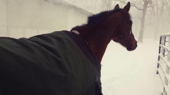 Но на деле всё может оказаться не так радужно! видео, животные, забавно, лошади, реакция, смешное, снег, юмор