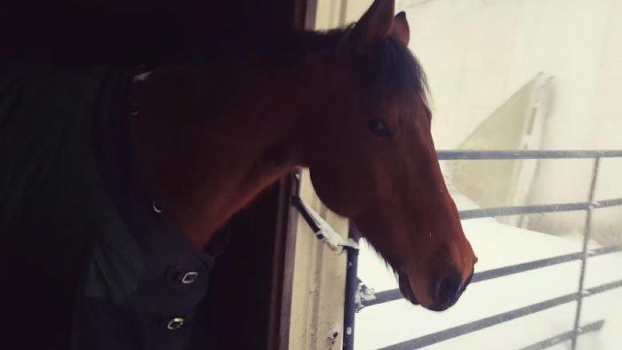 Когда сидишь дома, снег за окном всегда выглядит волшебно, так и хочется выйти погулять видео, животные, забавно, лошади, реакция, смешное, снег, юмор