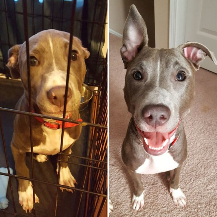 Собаки из приюта: снимки до и после обретения семьи до и после, домашние животные, приют для собак, собаки, собаки из приюта, фото собак, хозяин и пес, хозяин и собака