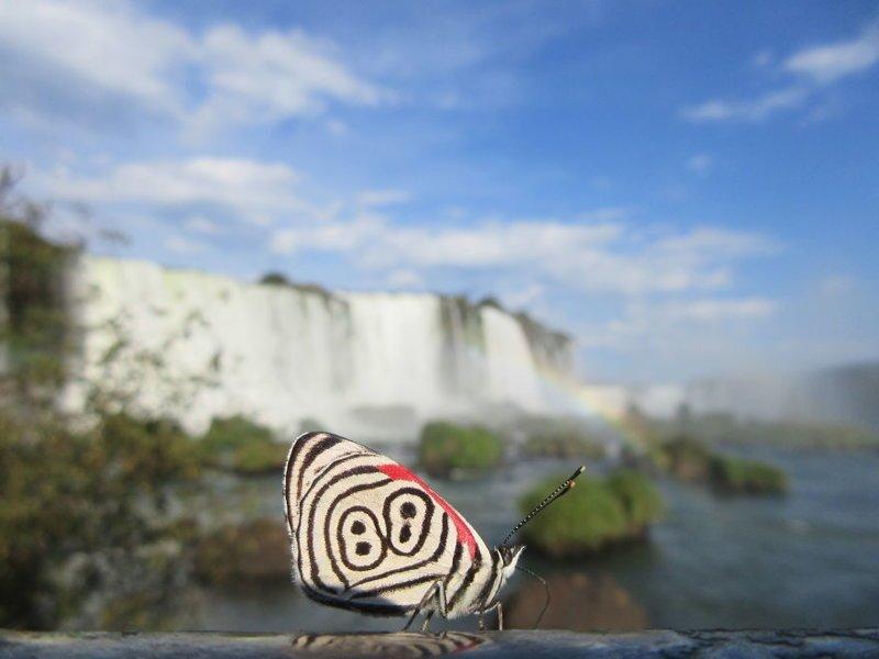 Пара провела 5 месяцев в джунглях Южной Америки и сделала удивительные открытия джунгли, дикие животные, животные, интересно, неизведанное, природа, фото, южная америка