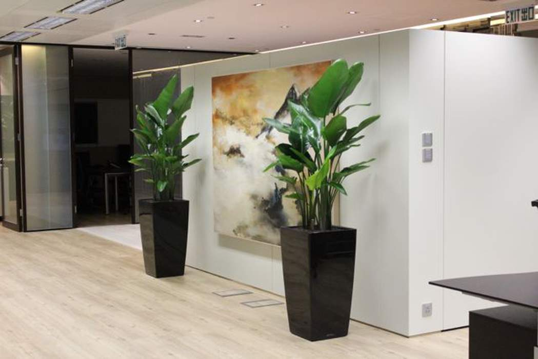 Office Plant / Indoor Plant Consultation Fee