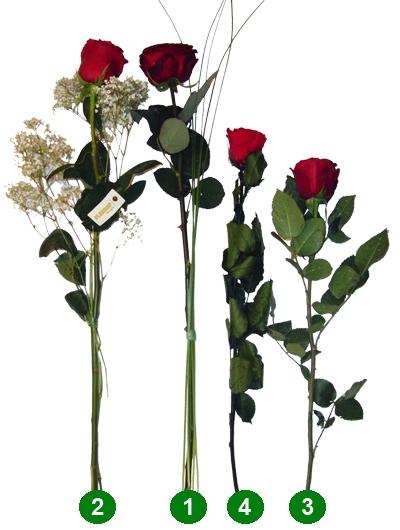 Eine einzelne rote Rose versenden  bei FloraKingde