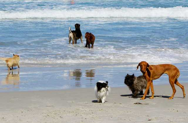 10 Places to Travel With Your Dog Vacation