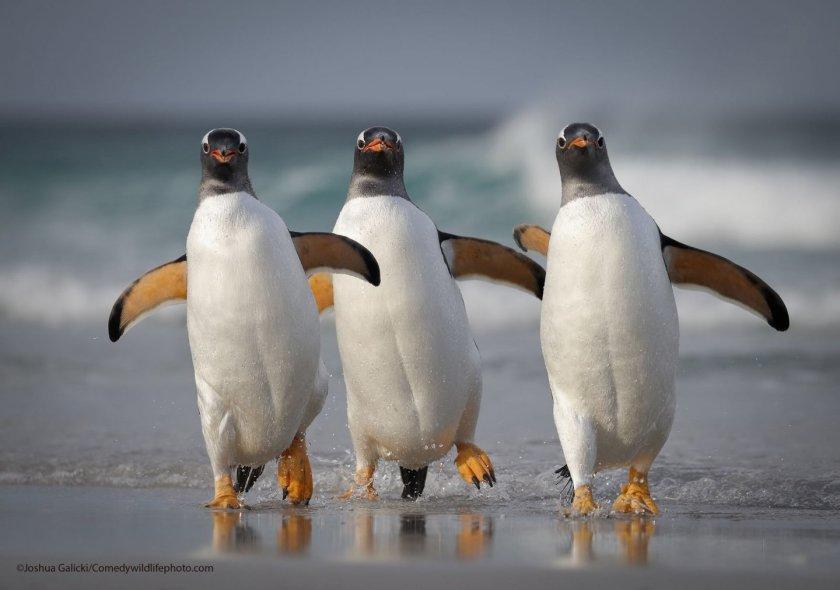 Comedy Wildlife Photo 2021 Contest Photo