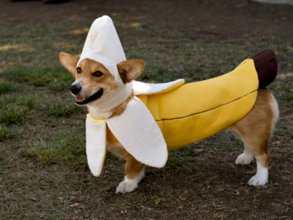 Here Are 10 Unamused Pets Dressed as Food Including a