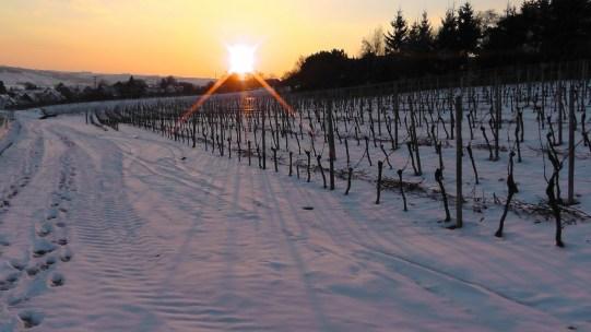 5 preguntas básicas para entender el mundo del vino - winter-277759_1920