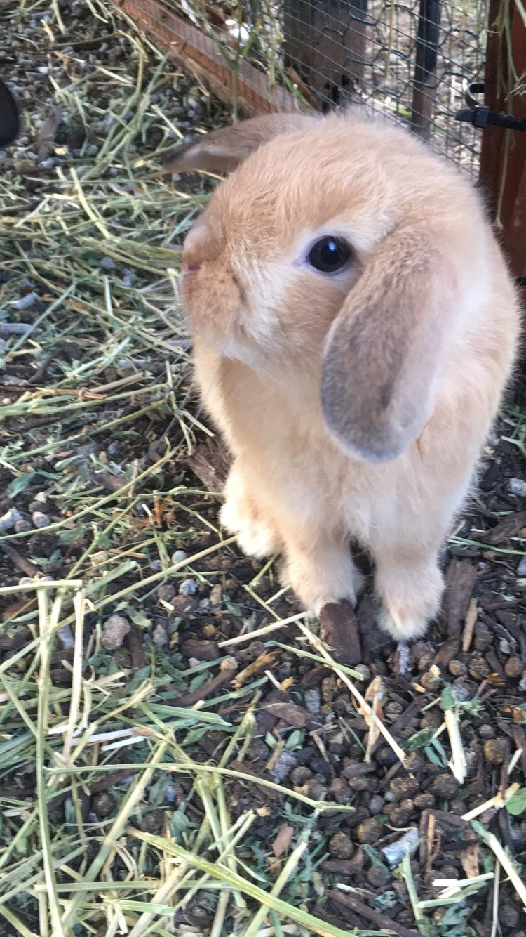 Baby rabbits | Small Furries for Sale - Gumtree