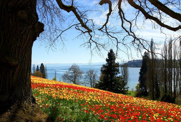 Bodensee und Insel Mainau  ffnungszeiten  Preise
