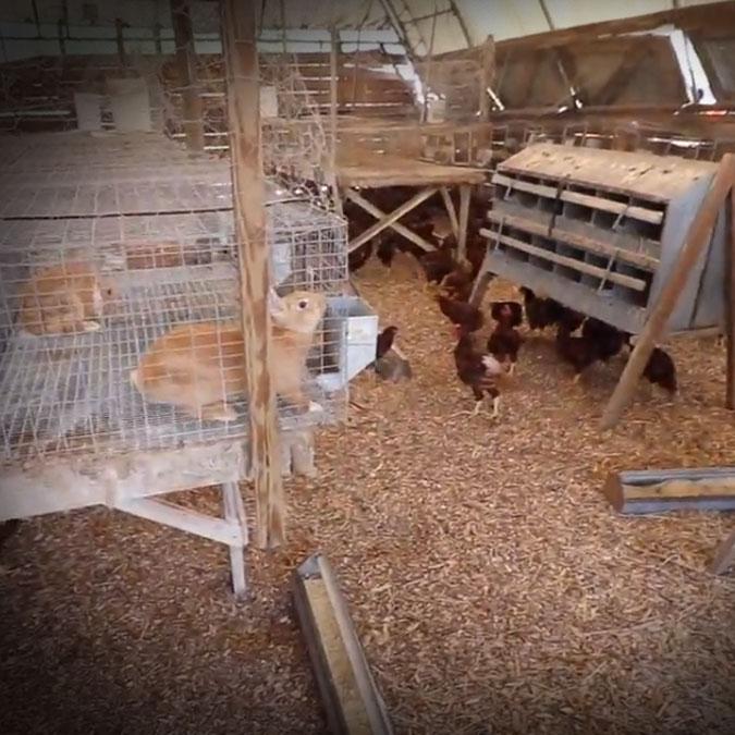 Polyface Farm Tour 2020   MOTHER EARTH NEWS FAIR ONLINE