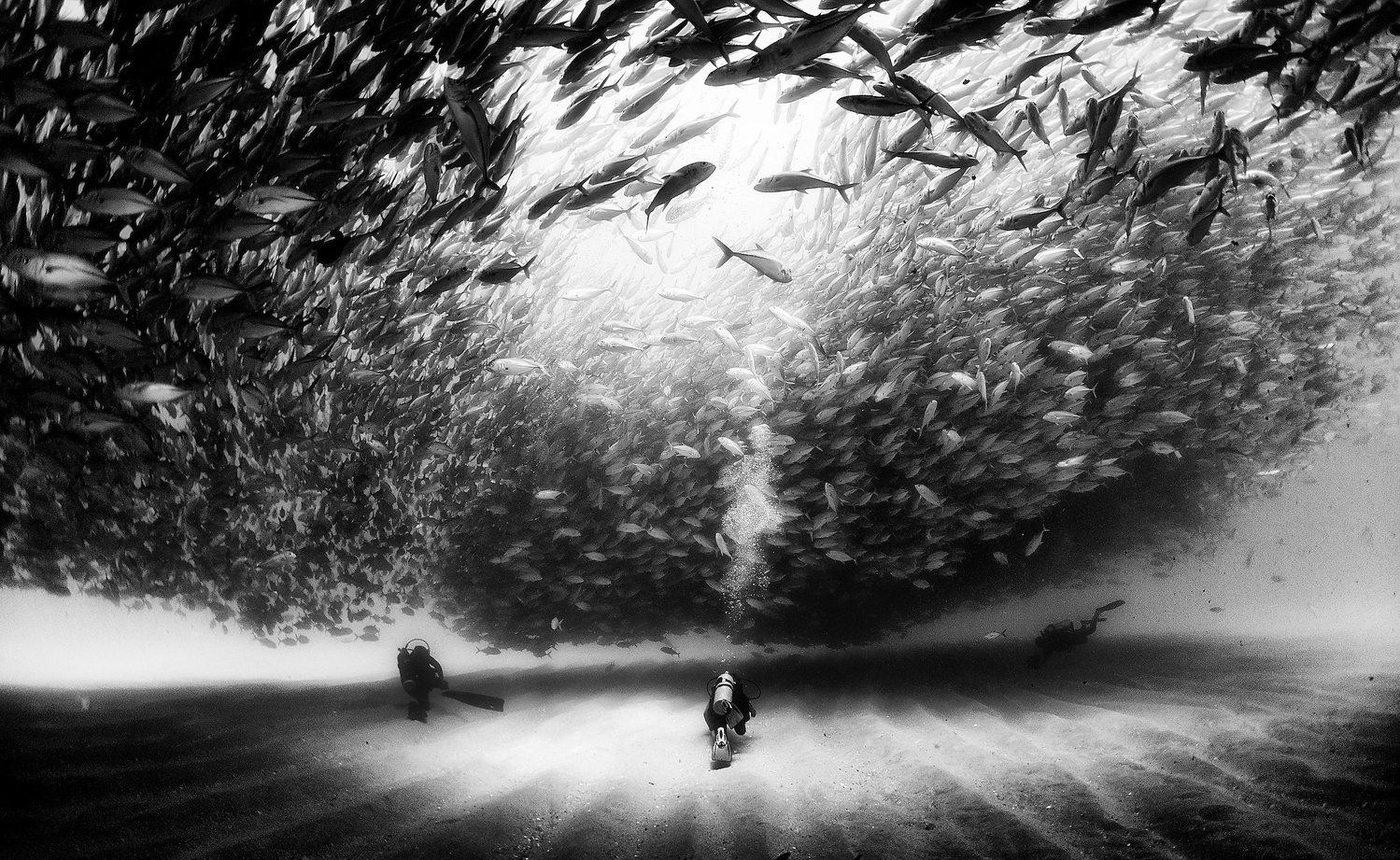 The Captivating Black and White Underwater Photography of Anuar Patjane Floriuk  Fstoppers