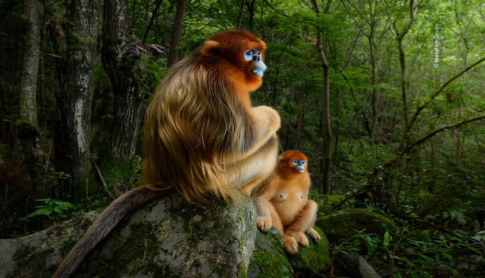 2019 Wildlife Photographer of the Year Competition Opens Today