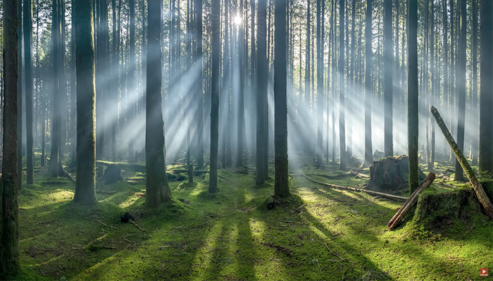 No Photoshop Necessary: This Guy Dragged a Fog Machine Into the Forest to Make an Award-Winning Photo