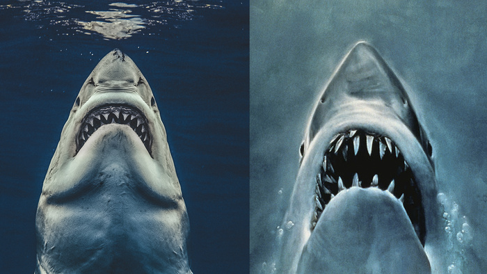 Photographer Recreates Jaws Movie Poster With Great White Capture