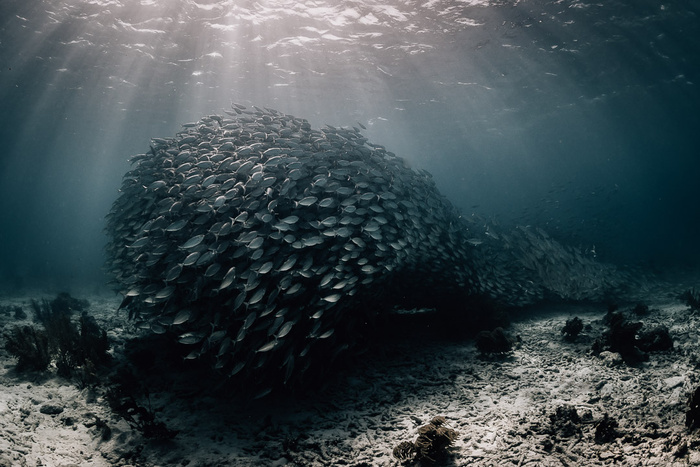 Composing Underwater Images