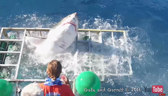 The Terrifying Moment a Shark Breaches an Underwater Photographer's Cage