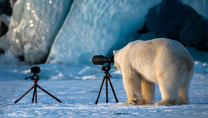What Do You Do If a Polar Bear Asks to Borrow Your Camera? Shoot an Award-Winning Image