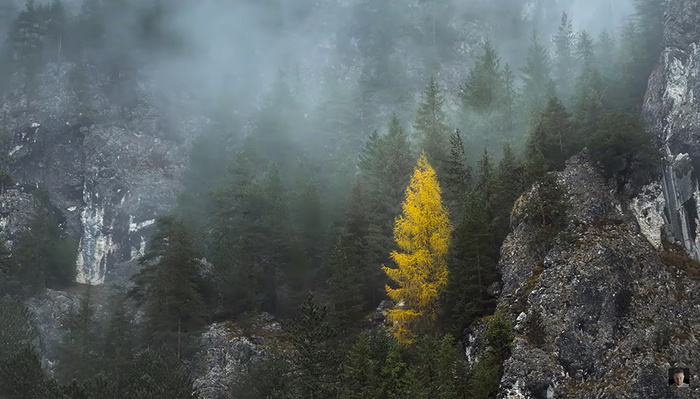 12 Fantastic Tips for Foggy Forest Photography