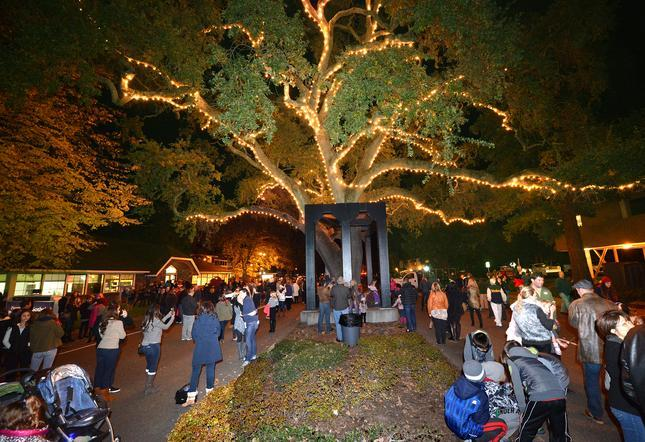 2017 Lighting of the Old Oak Tree  Danville  Funcheap