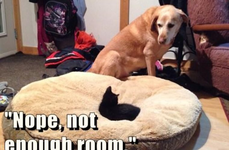 Image result for not enough room funny