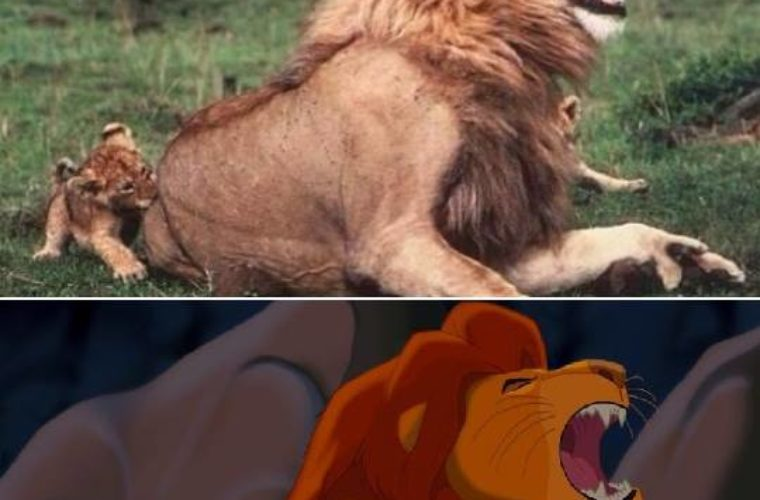 Lion King  Funny Pictures Quotes Memes Funny Images Funny Jokes Funny Photos