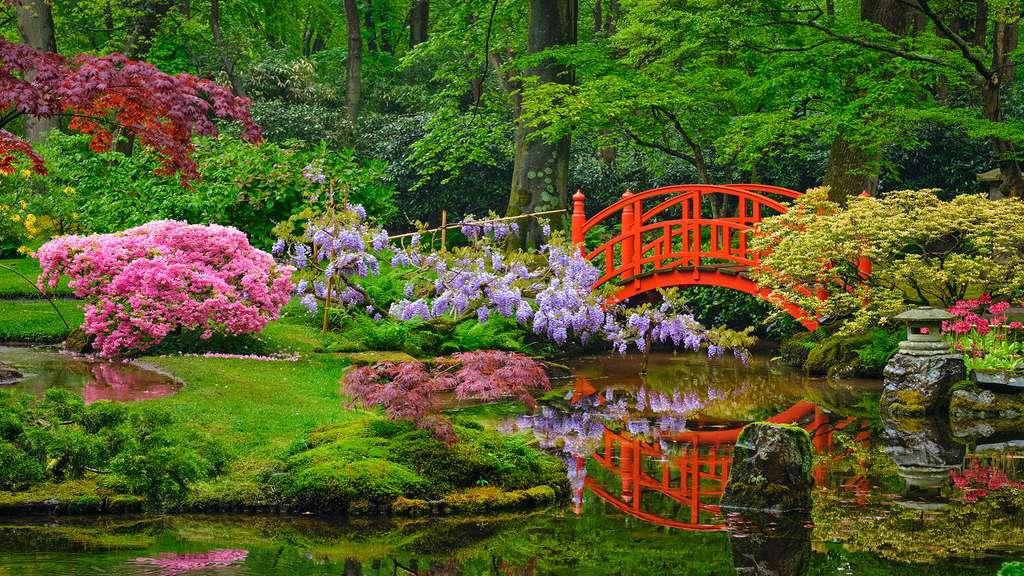 jardin japonais de lady daisy en hollande