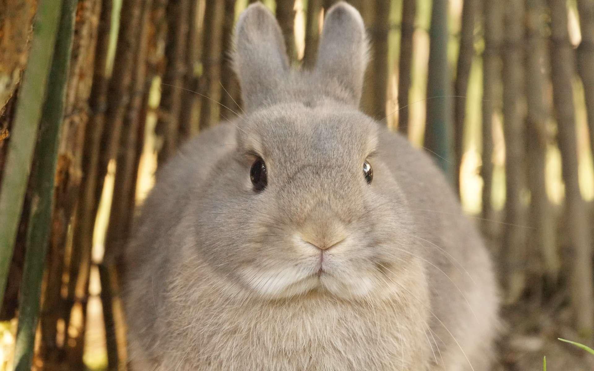 pourquoi les lapins ne sont-ils pas aussi gros que les chevaux ?