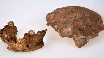 La découverte d'un nouvel Homo interroge les origines de Néandertal