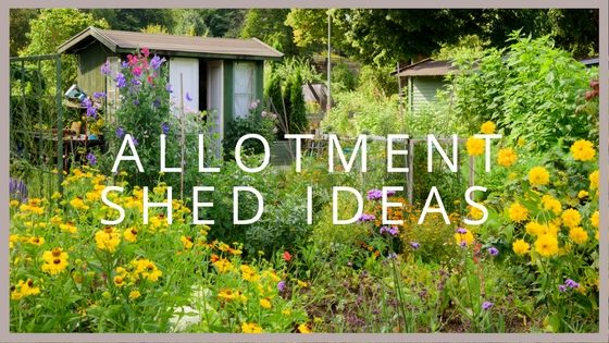 allotment shed ideas blog