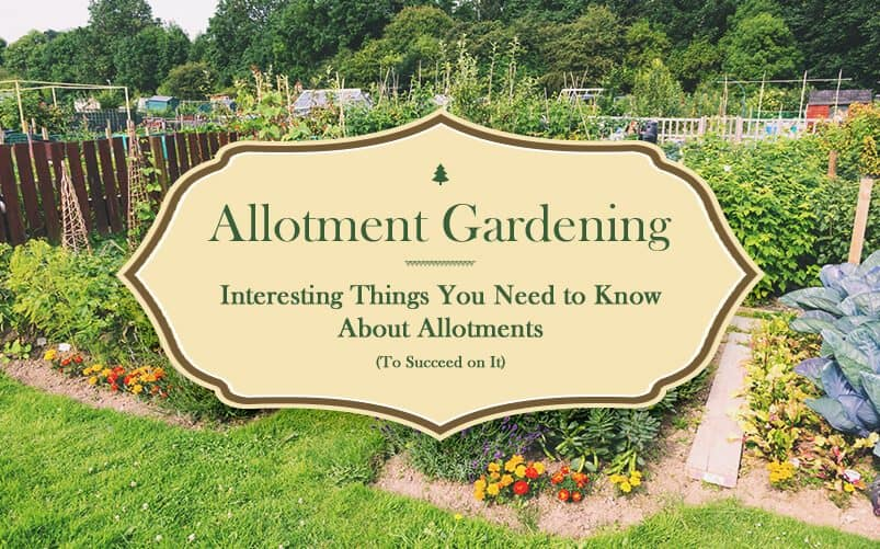 allotment gardening all the