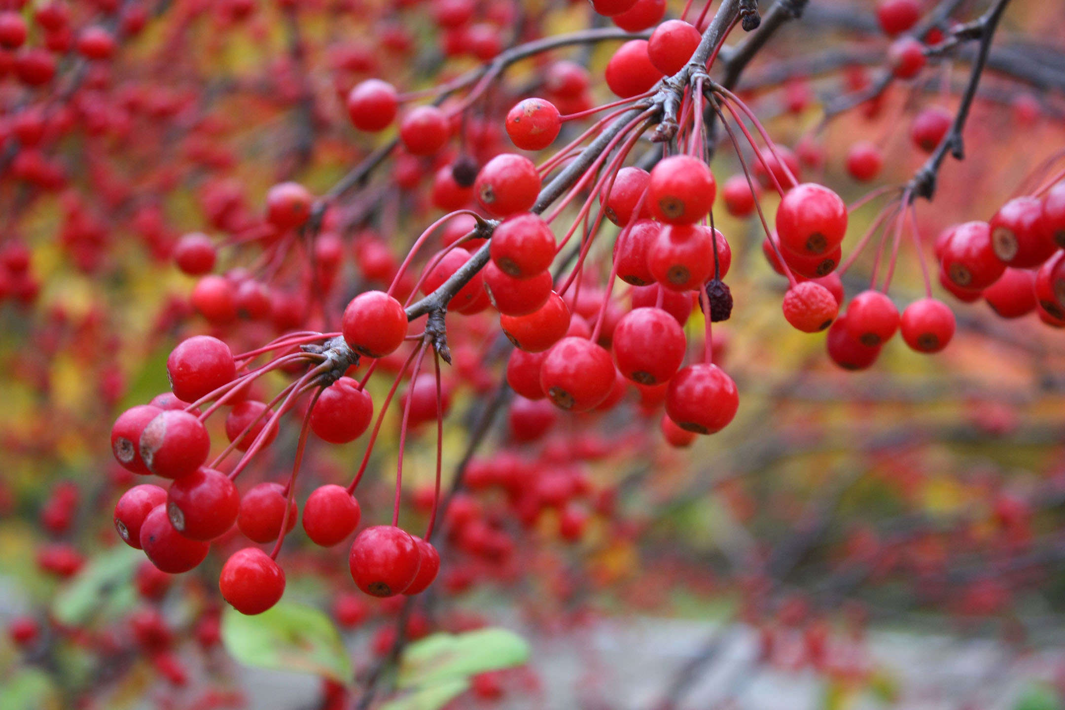 11 Best Trees To Plant For New England Style Foliage