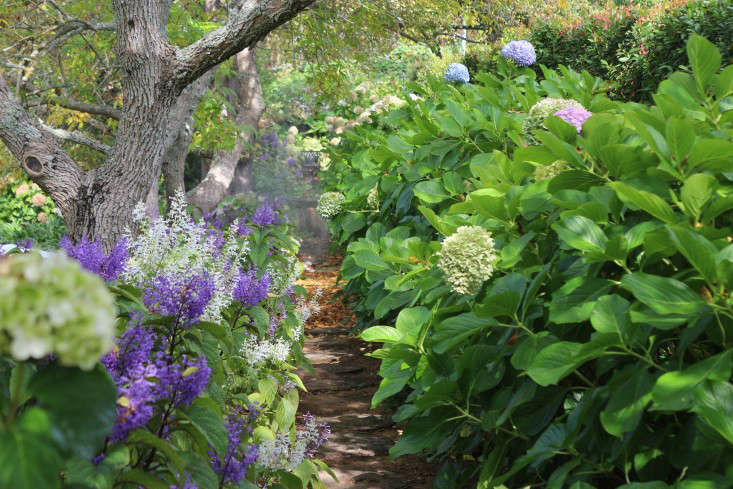 11 Garden Ideas To Steal From South Africa Gardenista