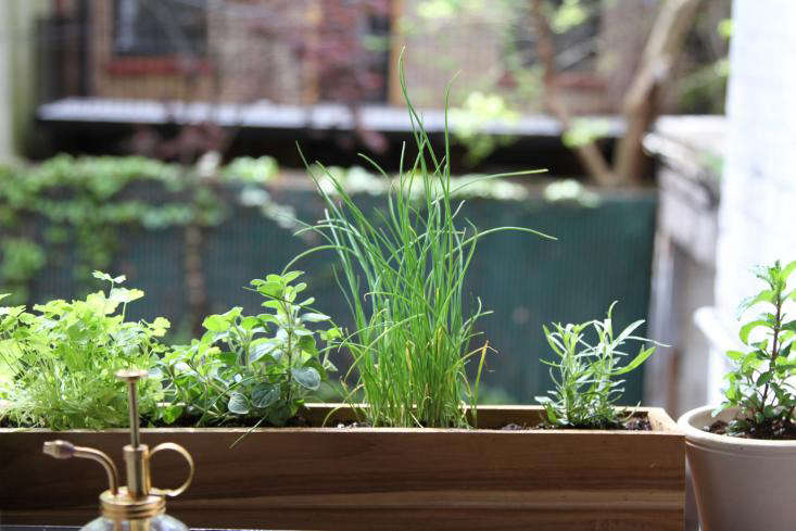 DIY Shade Tolerant Herbs To Grow In Your Apartment Gardenista