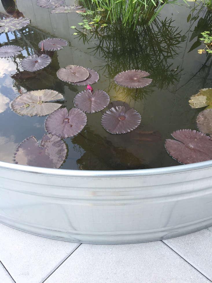 Garden Pond Shapes