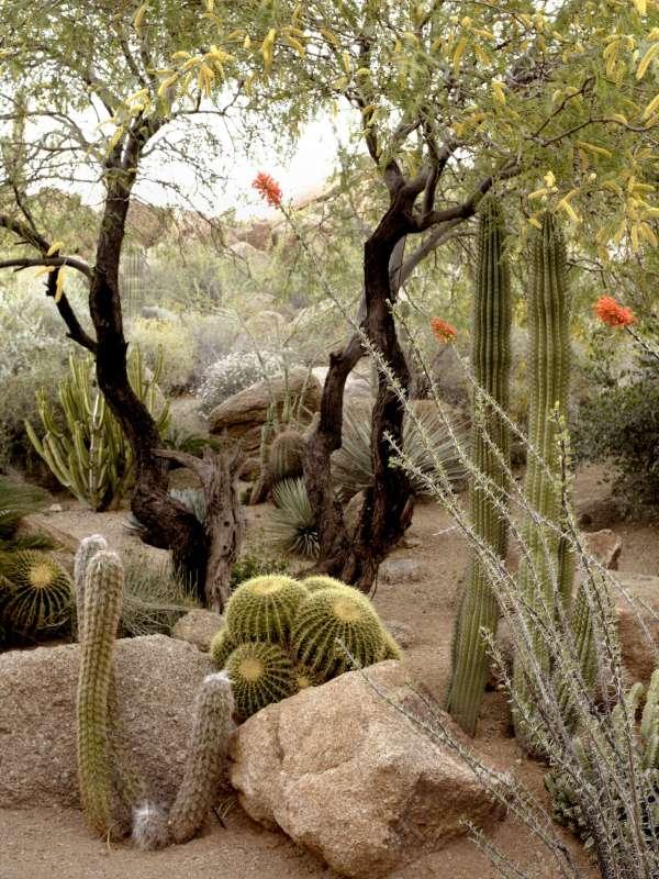 ideas steal desert gardens